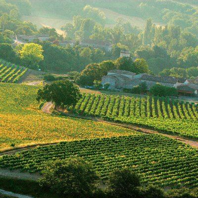vignoble-GAILLAC-CRT-Midi-Pyrenees-D.-Viet-1024x512